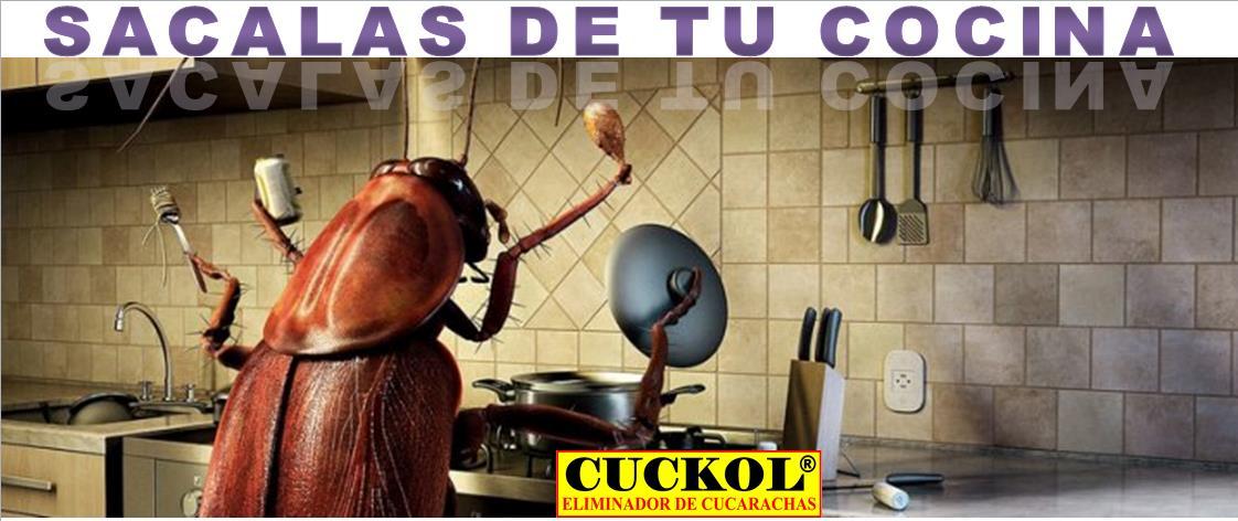 Industrias laford cucarachas - Moscas pequenas cocina ...