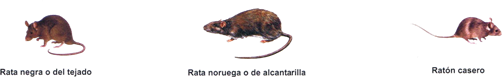 tipos_de_ratas.png